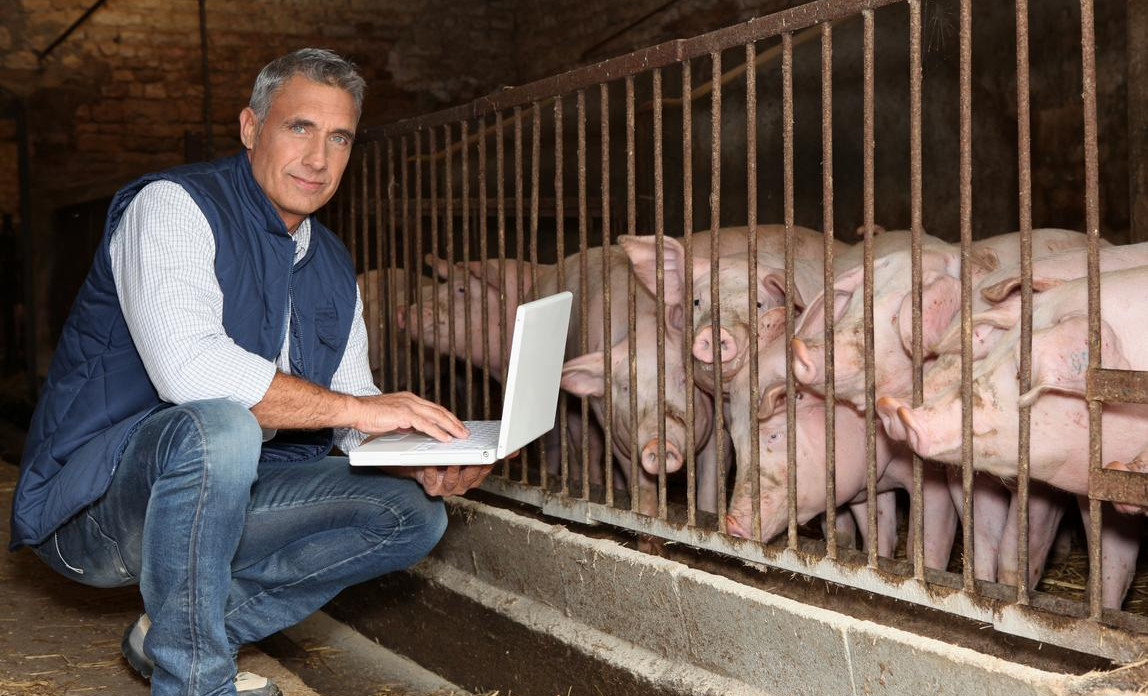Farmer using his laptop down by his pig pen