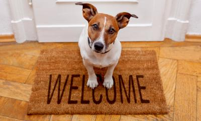 A small dog sitting on a front door mat with writing on it saying welcome