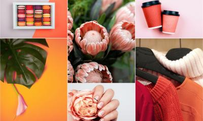 Mood board collating images and inspirational coral-coloured items
