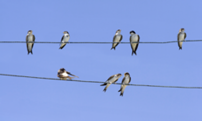 Birds sitting on cable line