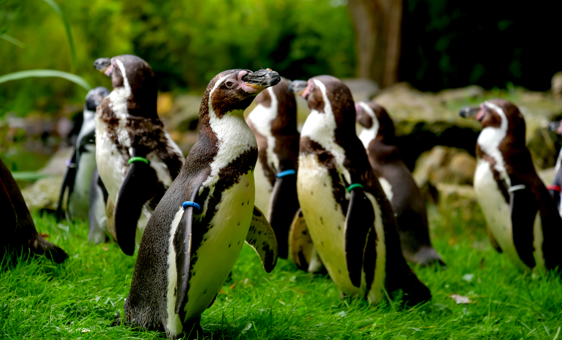 Penguins: business networking